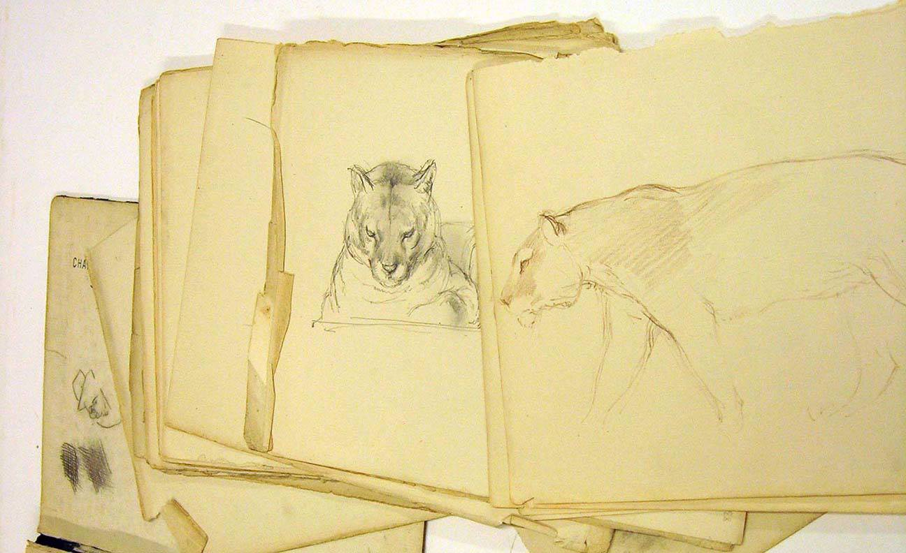 Sketch work by Charles Tunnicliffe